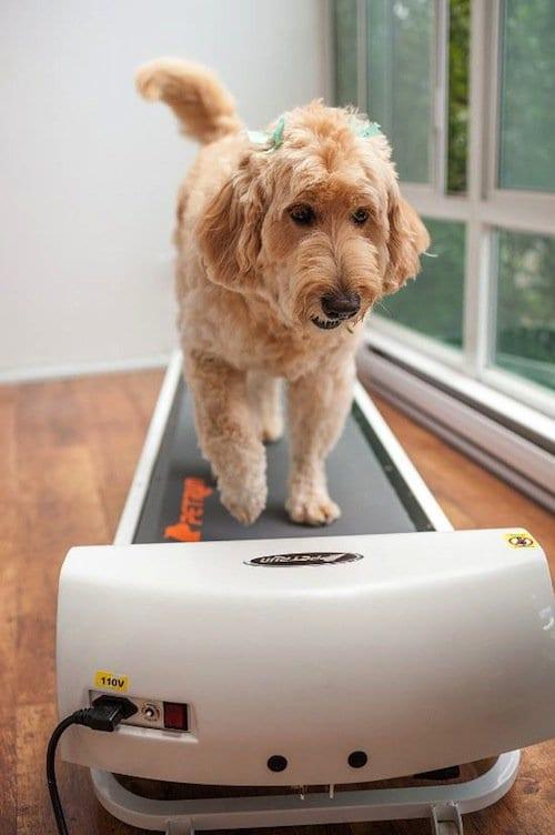pets-treadmill