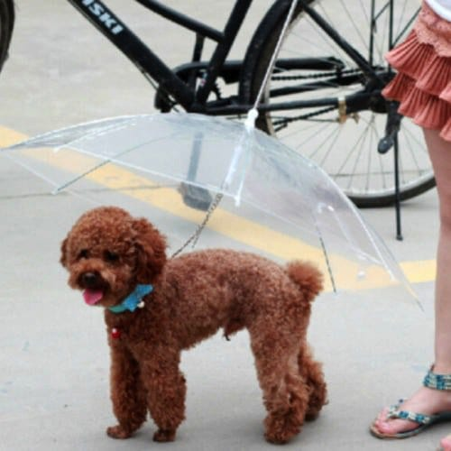 dog standing outside with umbrella over them