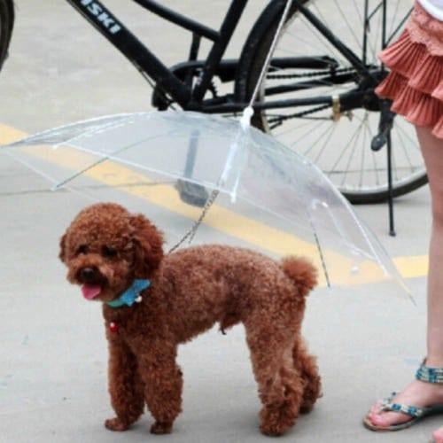 pets-umbrella