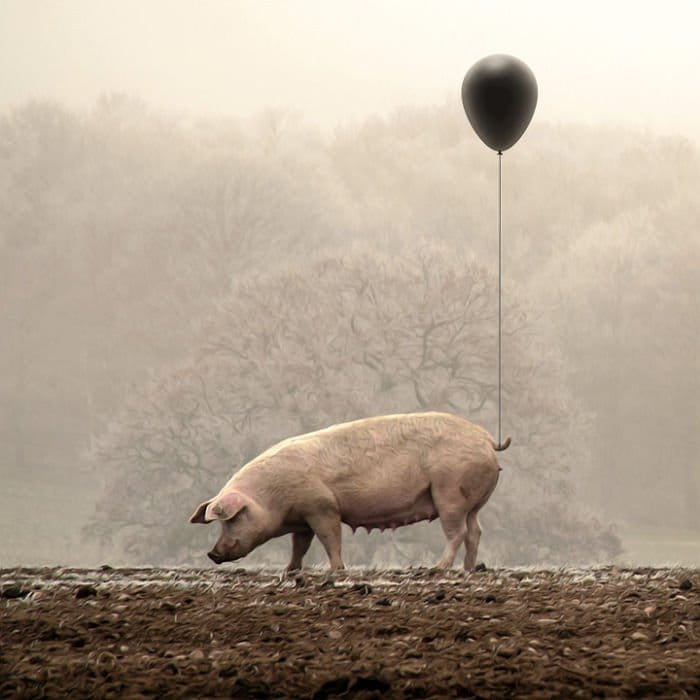 pig balloon tail