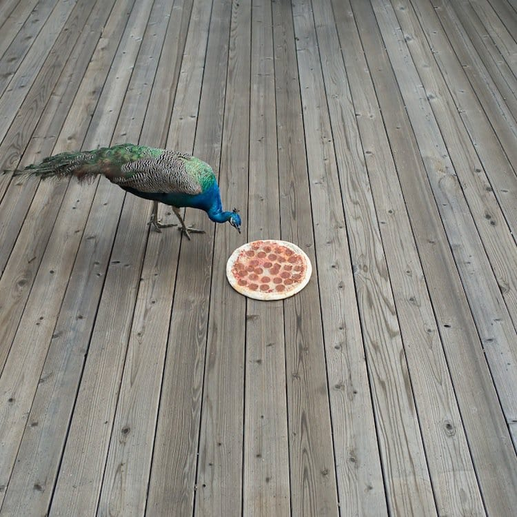 pizza-peacock