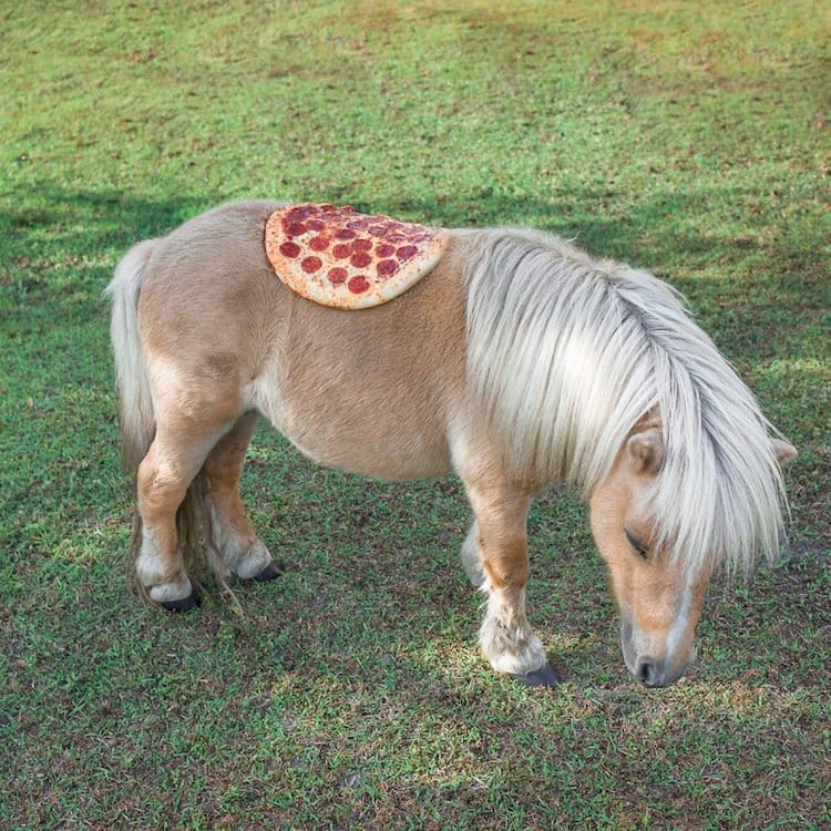 pizza-saddle