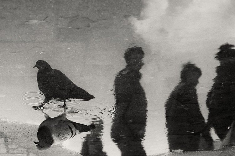 puddle reflection bird people