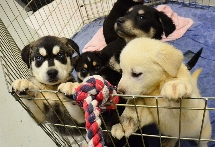 puppies playpen