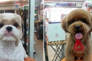 round dog haircuts square