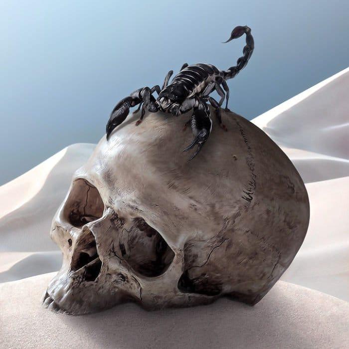 scorpion skull