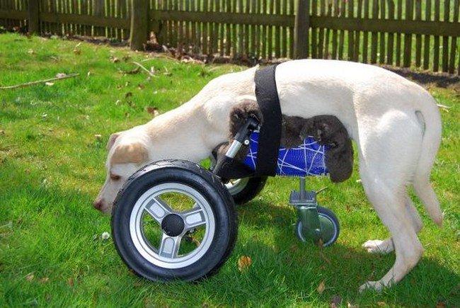 side dog grass wheelchair