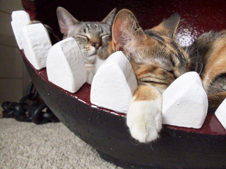sleeping cat chomp paw
