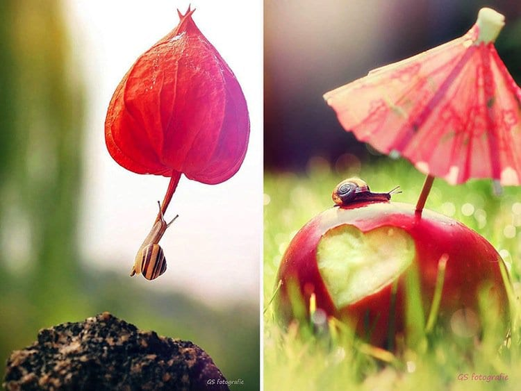 snail-apple