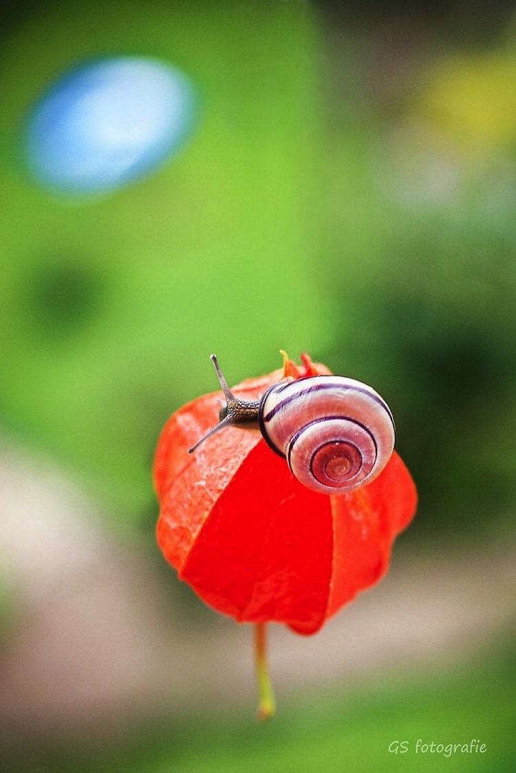 snail-flower-two