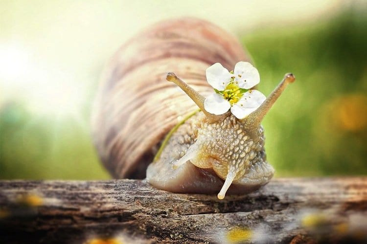 Photographer Gabi Stickler Shows Us The Beauty In Snails