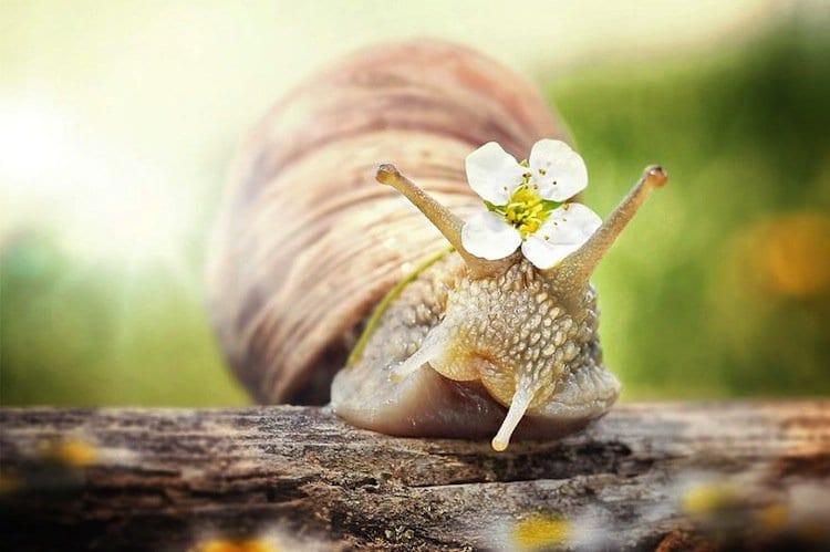 Snail mail celebrity addresses malibu