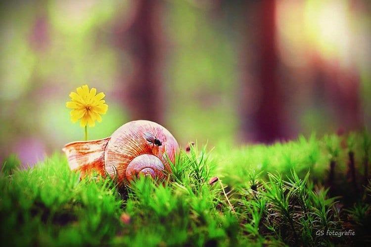 snail-fly