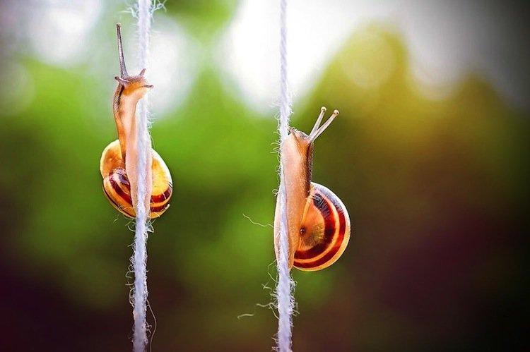 snail-ropes