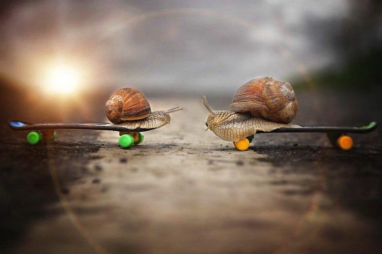 snail-skateboard-two