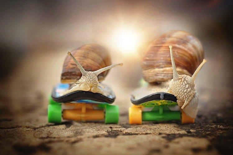 snail-skateboard