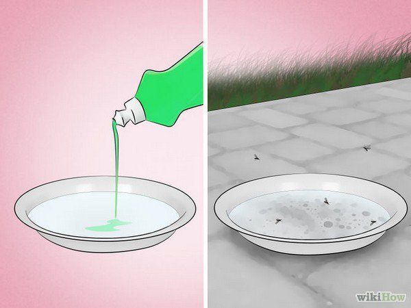 soapy water dish mosquitoes