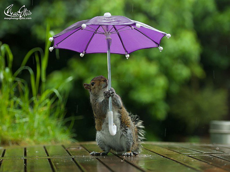 squirrel umbrella looking up