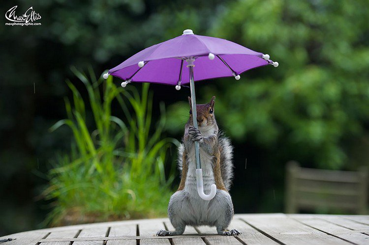 squirrel umbrella looking