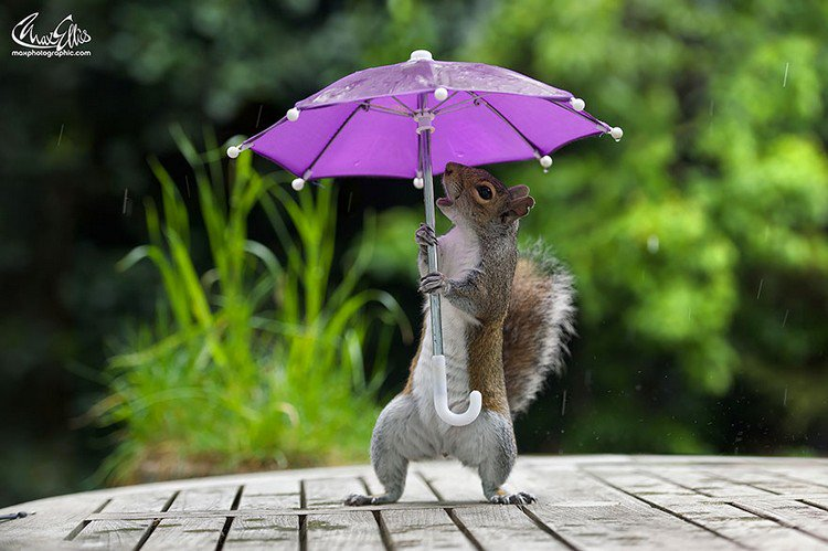 squirrel umbrella open mouth