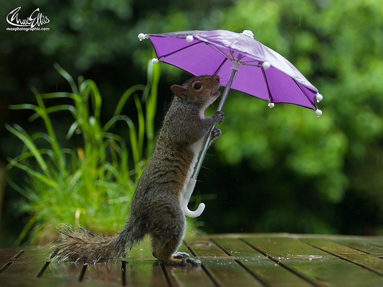 squirrel umbrella right facing