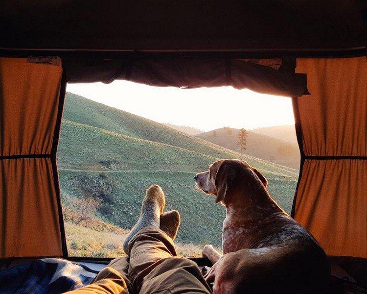 tent feet dog