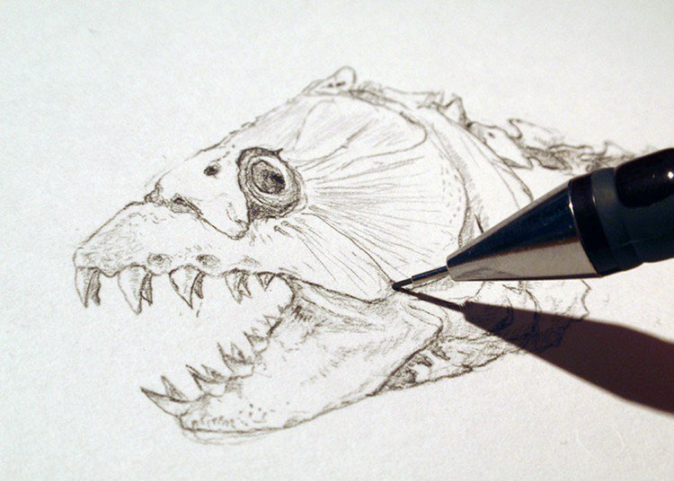 tiger fish head