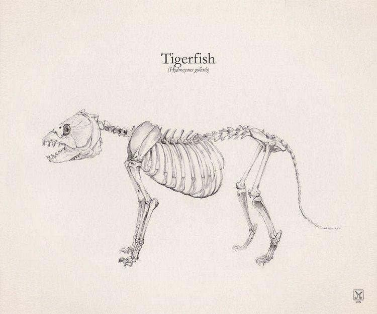 tigerfish