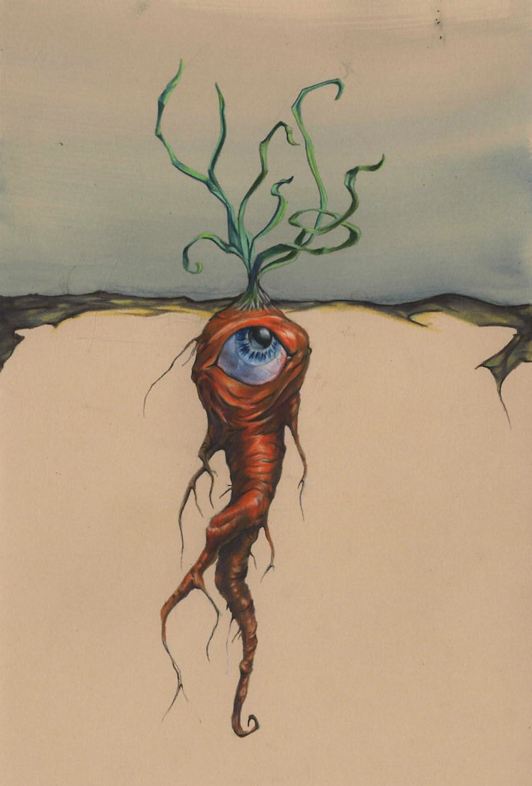 tim-carrot