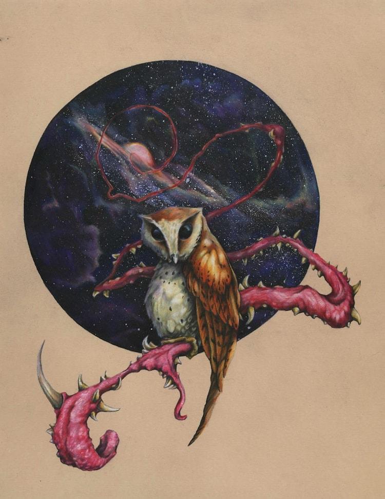 tim-owl