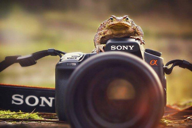 toad camera