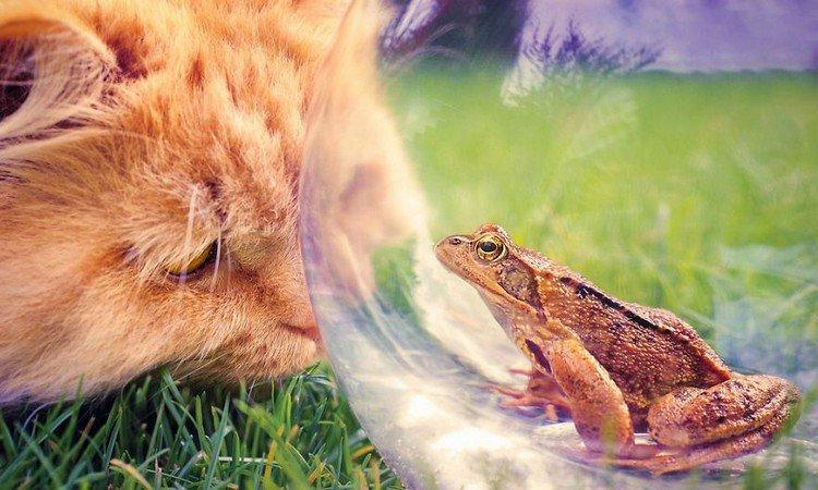 toad cat
