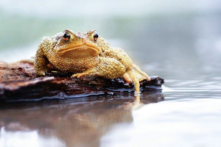 toad water