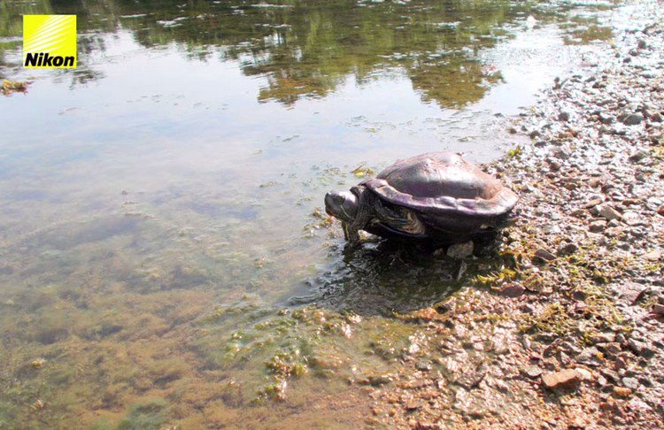 tortoise river