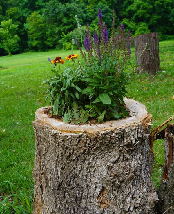 14 tree stumps turned into gorgeous planters part 2 - Tronco albero decorativi ...