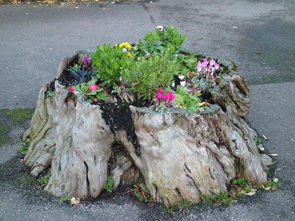 tree-stump-planter-driveway