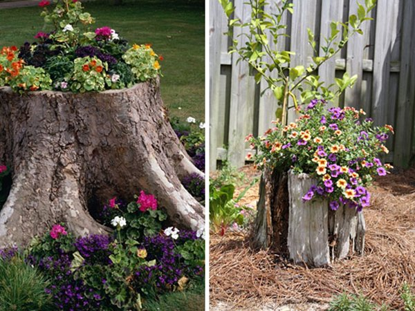 14 Tree Stumps Turned Into Gorgeous Planters Part 2