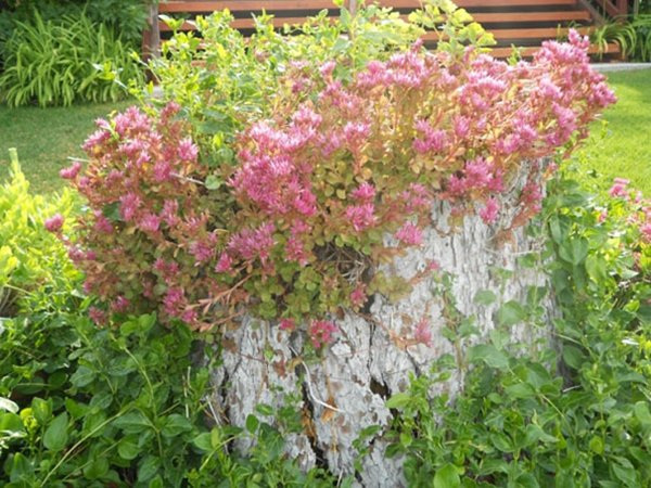 tree-stump-planter-pink