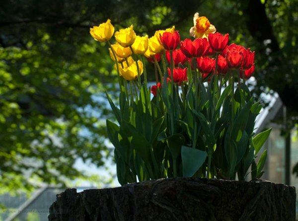 tree-stump-planter-red