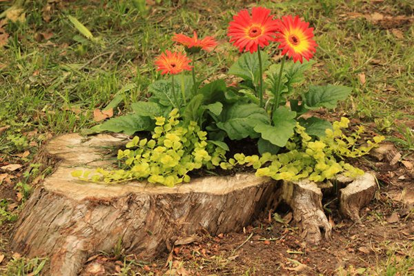 tree-stump-planter-shallow