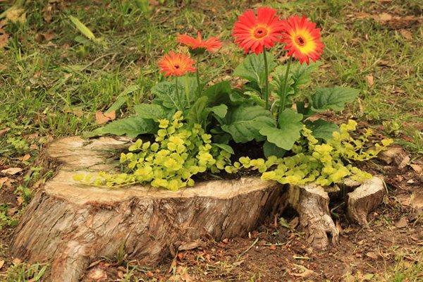 tree-stump-planter-shallow