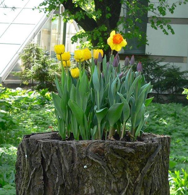 tree-stump-planter-spring