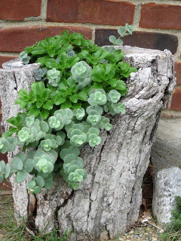 tree-stump-planter-succlents