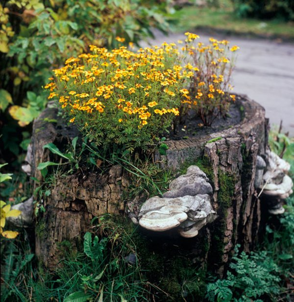 Tree Stump Planter Yellow