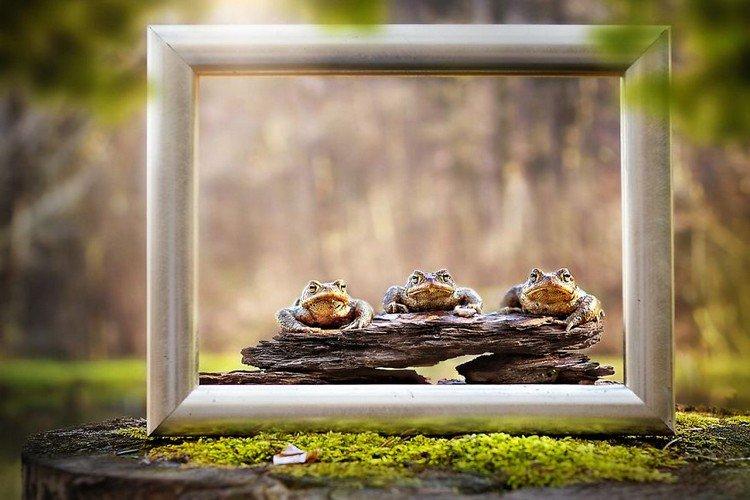 trio toads frame