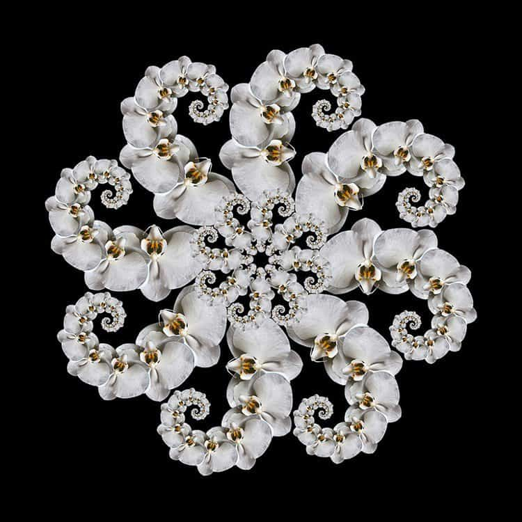 white orchid fractal