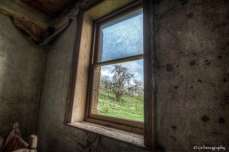 window-tree