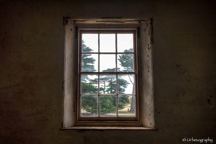 window-trees