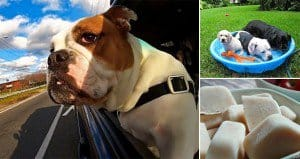 10 Ways To Keep Your Dogs Cool