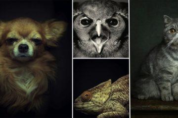 Animals Displaying Human Emotions